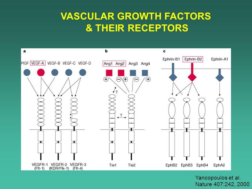 VASCULAR GROWTH FACTORS & THEIR RECEPTORS Yancopoulos et al. Nature 407:242, 2000