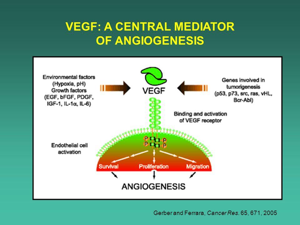 VEGF: A CENTRAL MEDIATOR OF ANGIOGENESIS Gerber and Ferrara, Cancer Res. 65, 671, 2005