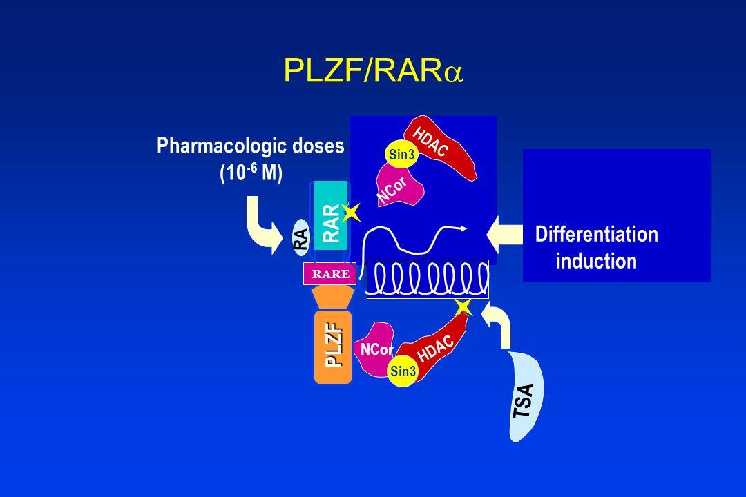 Co-repressor HDAC Sin3 NCor HDAC Sin3 NCor HDAC Sin3 Co-activators (HAT) PLZF RARE RAR RA PLZF/RAR Pharmacologic doses (10 -6 M) Differentiation induc
