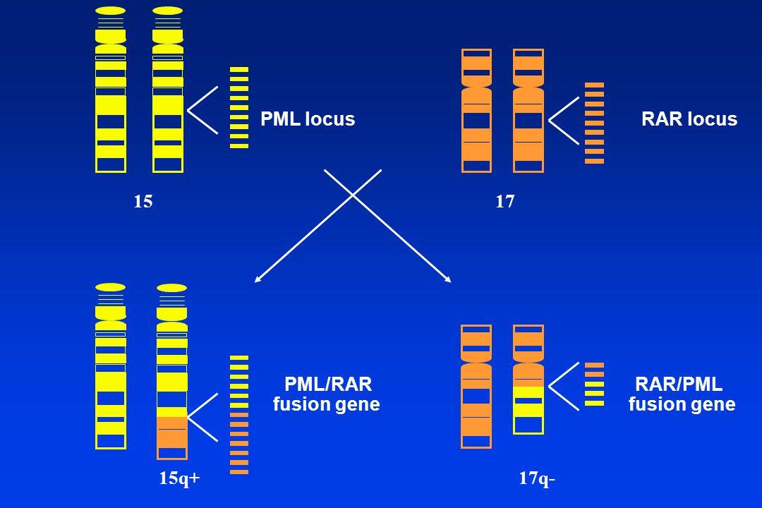 1517 15q+17q- PML locusRAR locus PML/RAR fusion gene RAR/PML fusion gene