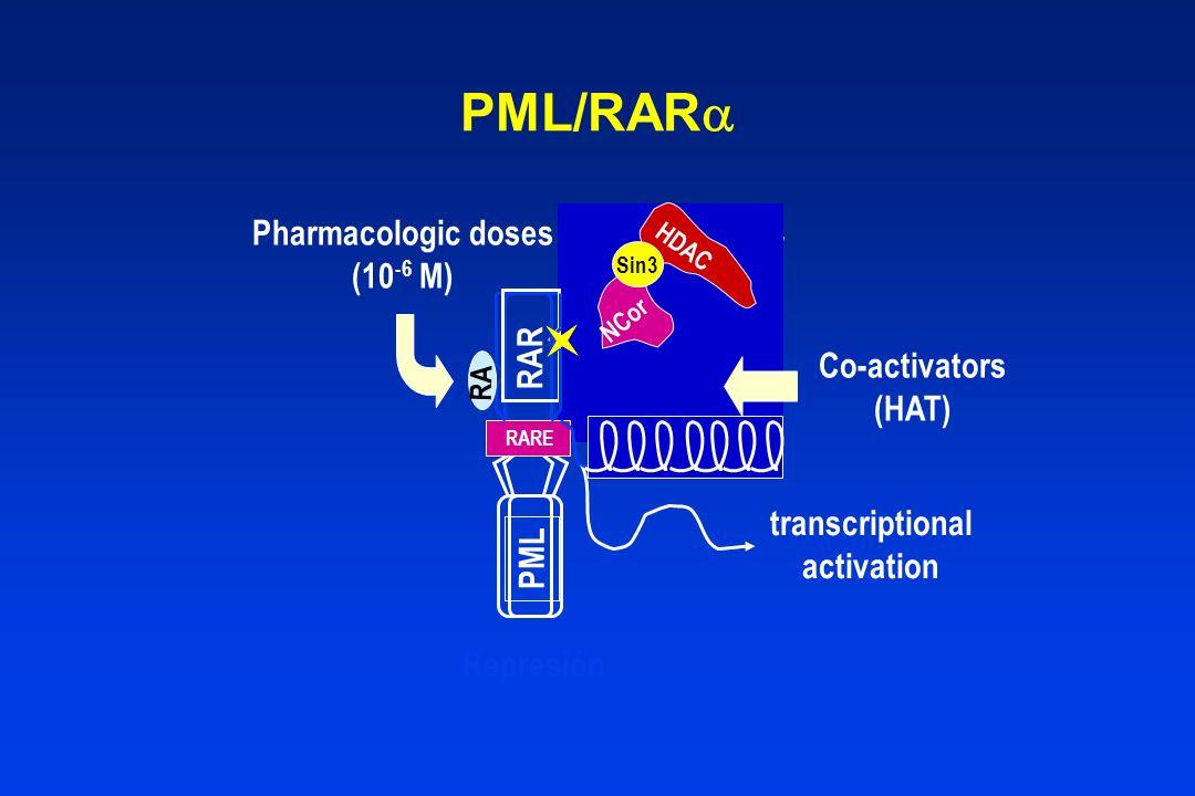 Co-repressor NCor HDAC Sin3 NCor HDAC Sin3 Represión PML RARE RAR RA PML/RAR transcriptional activation Co-activators (HAT) Pharmacologic doses (10 -6