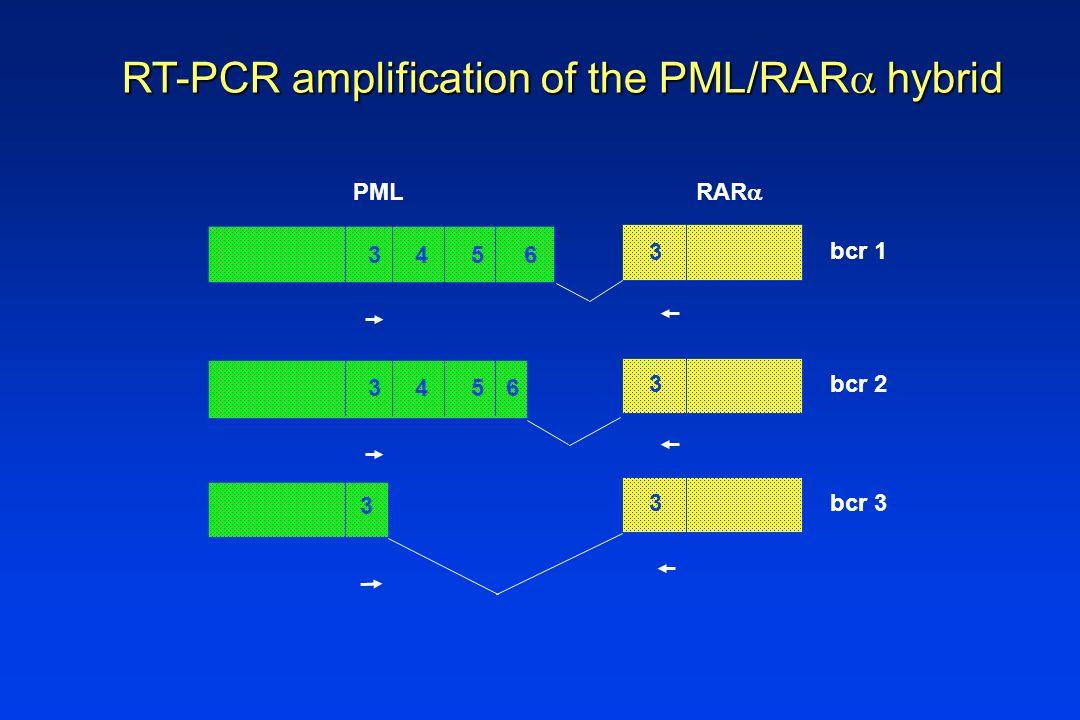 PML RAR RT-PCR amplification of the PML/RAR hybrid 3456 3 bcr 1 3456 3 bcr 2 3 3 bcr 3