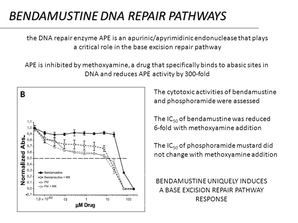 the DNA repair enzyme APE is an apurinic/apyrimidinic endonuclease that plays a critical role in the base excision repair pathway APE is inhibited by