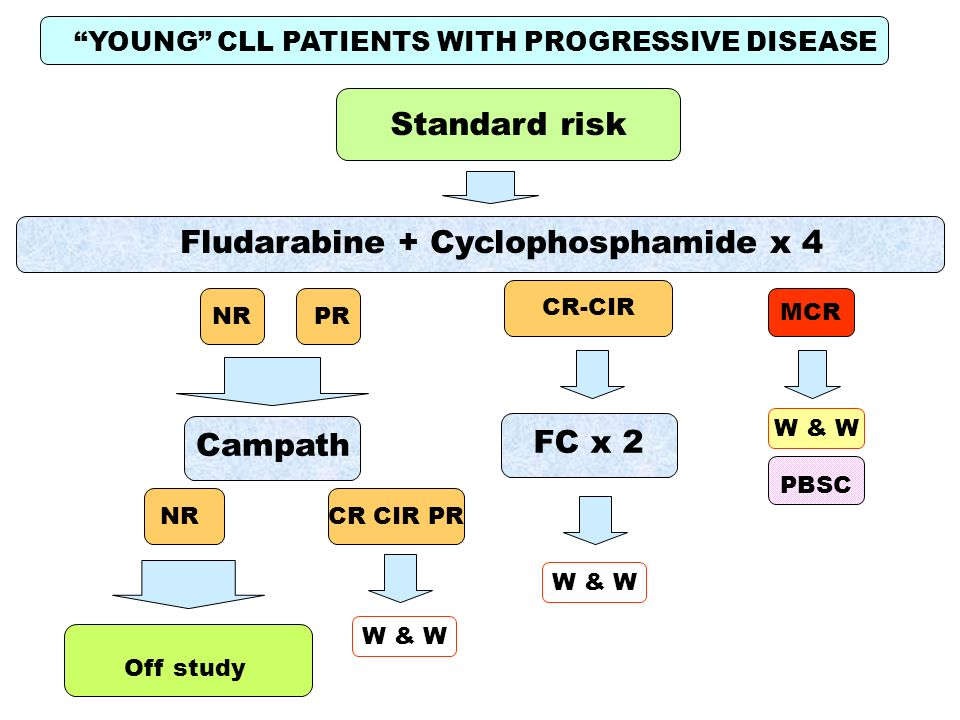 YOUNG CLL PATIENTS WITH PROGRESSIVE DISEASE Fludarabine + Cyclophosphamide x 4 Standard risk Campath CR-CIR W & W PBSC W & W NR MCR NRCR CIR PR W & W PR Off study FC x 2