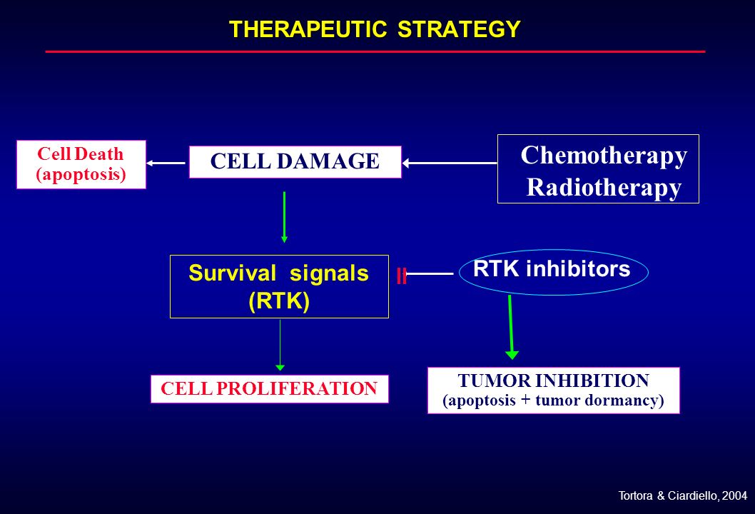THERAPEUTIC STRATEGY Chemotherapy Radiotherapy TUMOR INHIBITION (apoptosis + tumor dormancy) RTK inhibitors Survival signals (RTK) CELL DAMAGE Cell De