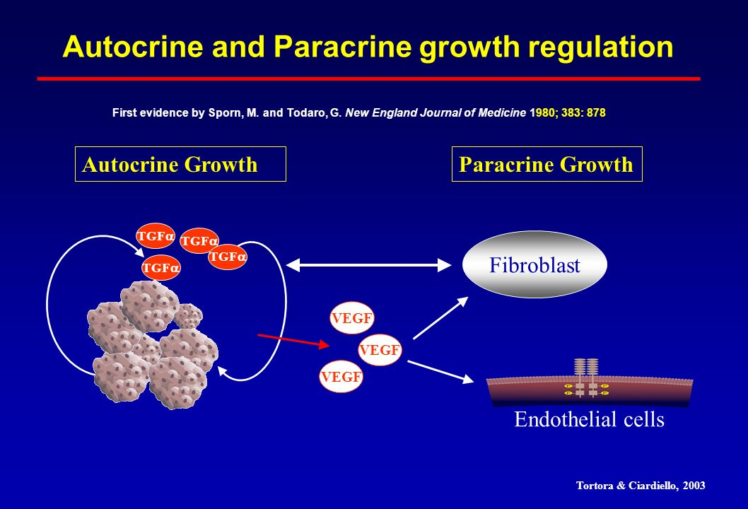 Fibroblast Autocrine and Paracrine growth regulation VEGF First evidence by Sporn, M. and Todaro, G. New England Journal of Medicine 1980; 383: 878 TG