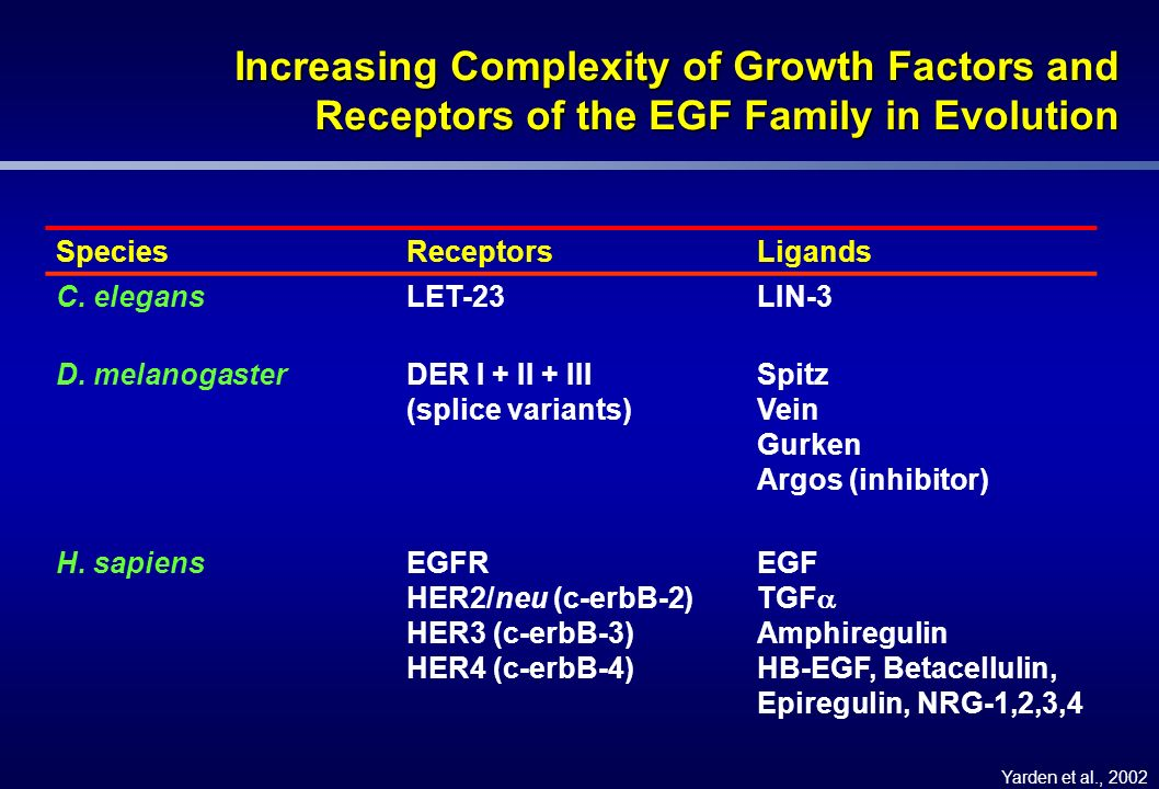 Increasing Complexity of Growth Factors and Receptors of the EGF Family in Evolution SpeciesReceptorsLigands C. elegansLET-23LIN-3 D. melanogasterDER