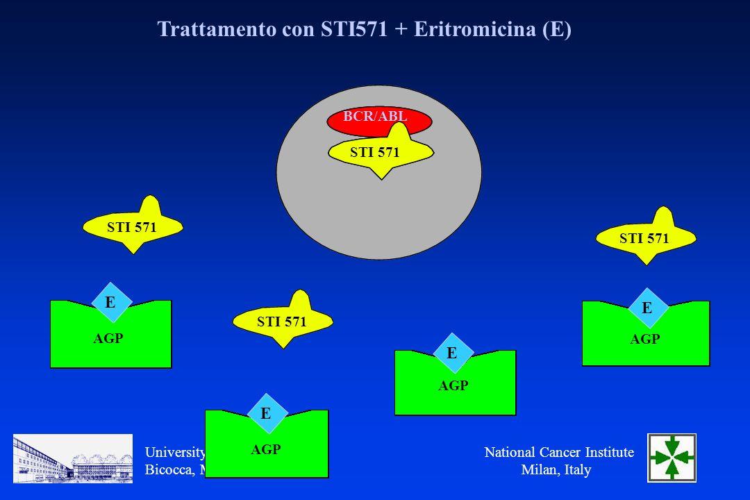 National Cancer Institute Milan, Italy University of Milano Bicocca, Monza, Italy Trattamento con STI571 + Eritromicina (E) BCR/ABL STI 571 AGP E E E E