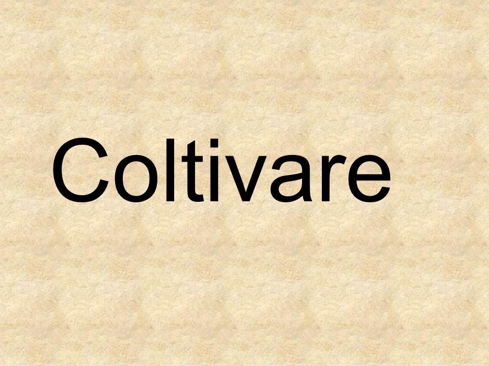 Coltivare
