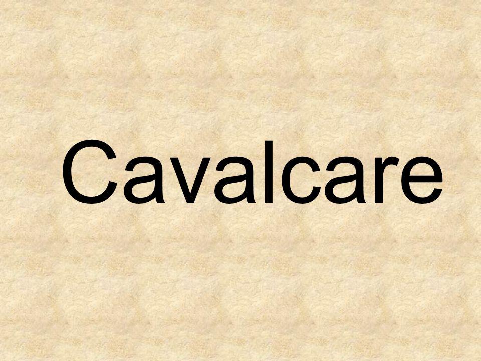 Cavalcare