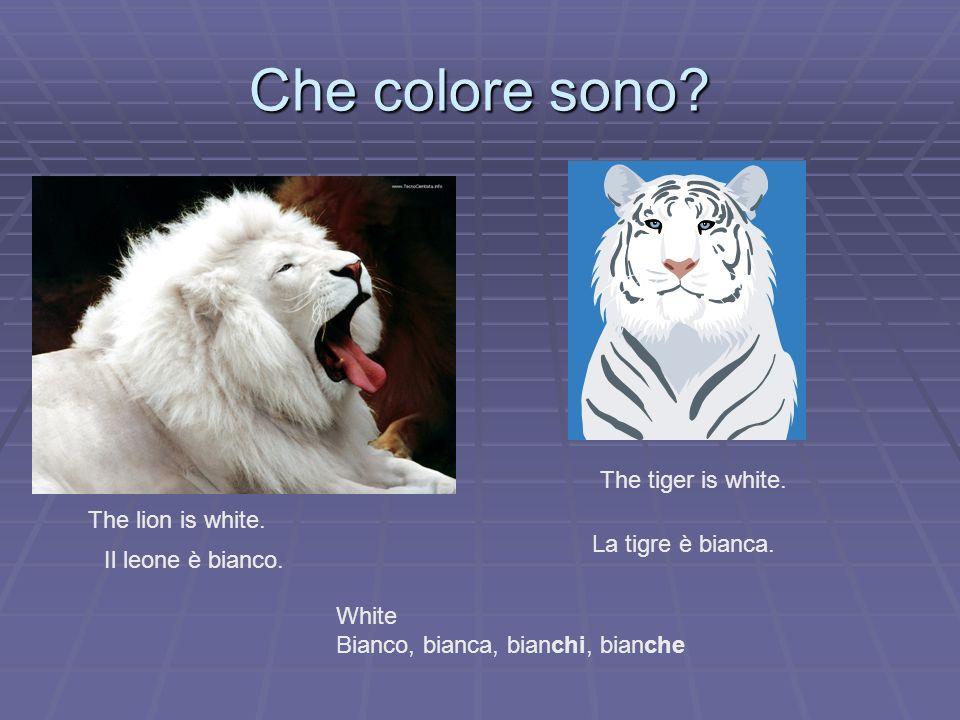Che colore sono? The lion is white. Il leone è bianco. The tiger is white. La tigre è bianca. White Bianco, bianca, bianchi, bianche