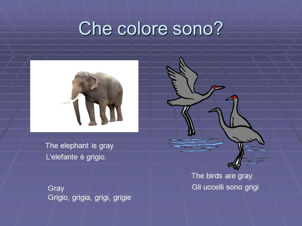Che colore sono? The birds are gray. Gli uccelli sono grigi The elephant is gray. Lelefante è grigio. Gray Grigio, grigia, grigi, grigie