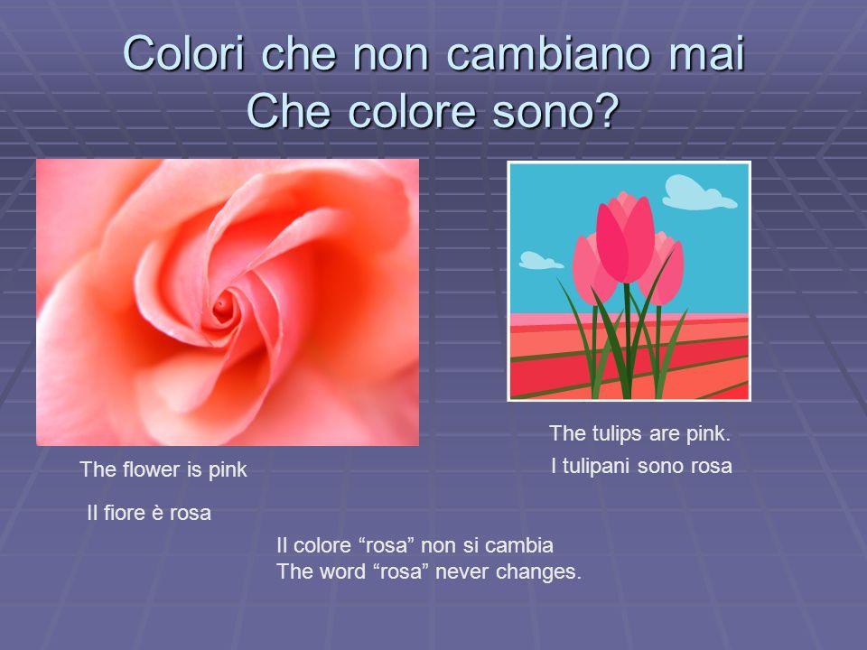 Colori che non cambiano mai Che colore sono? The flower is pink Il fiore è rosa The tulips are pink. I tulipani sono rosa Il colore rosa non si cambia