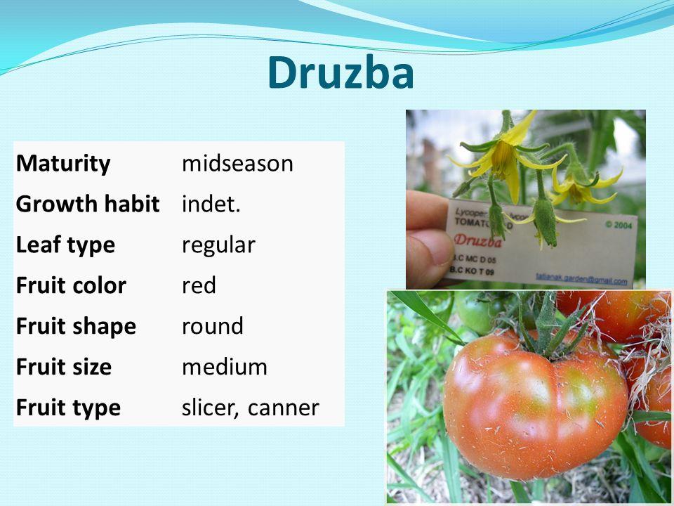 Druzba Maturitymidseason Growth habitindet. Leaf typeregular Fruit colorred Fruit shaperound Fruit sizemedium Fruit typeslicer, canner