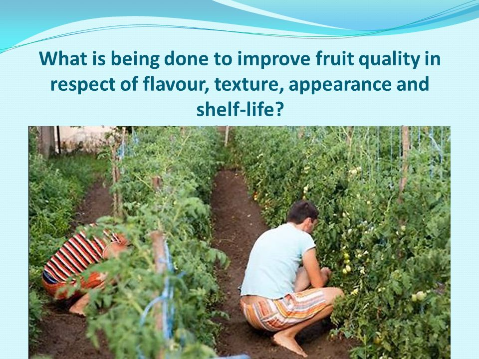 What is being done to improve fruit quality in respect of flavour, texture, appearance and shelf-life? This is being achieved by the development of ne