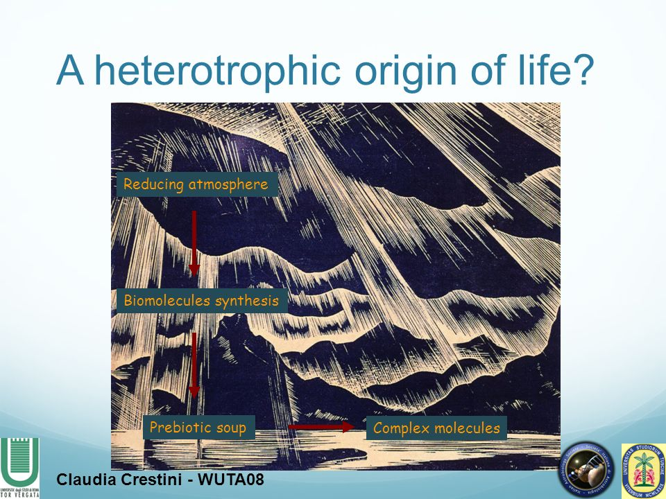 Reducing atmosphere Biomolecules synthesis Prebiotic soup Complex molecules A heterotrophic origin of life? Claudia Crestini - WUTA08