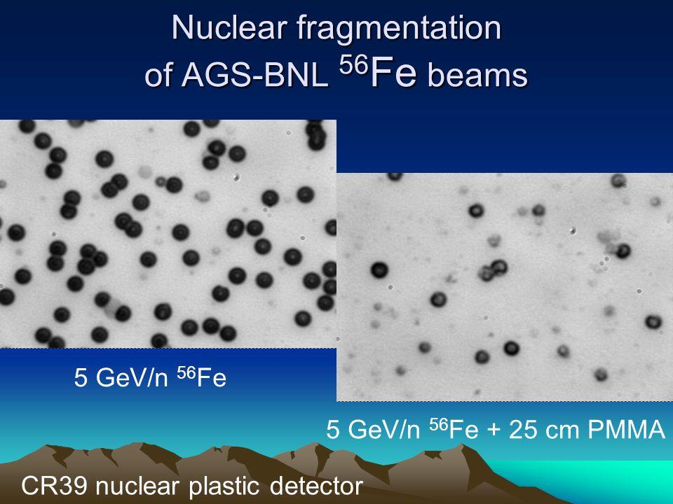 Nuclear fragmentation of AGS-BNL 56 Fe beams 5 GeV/n 56 Fe 5 GeV/n 56 Fe + 25 cm PMMA CR39 nuclear plastic detector
