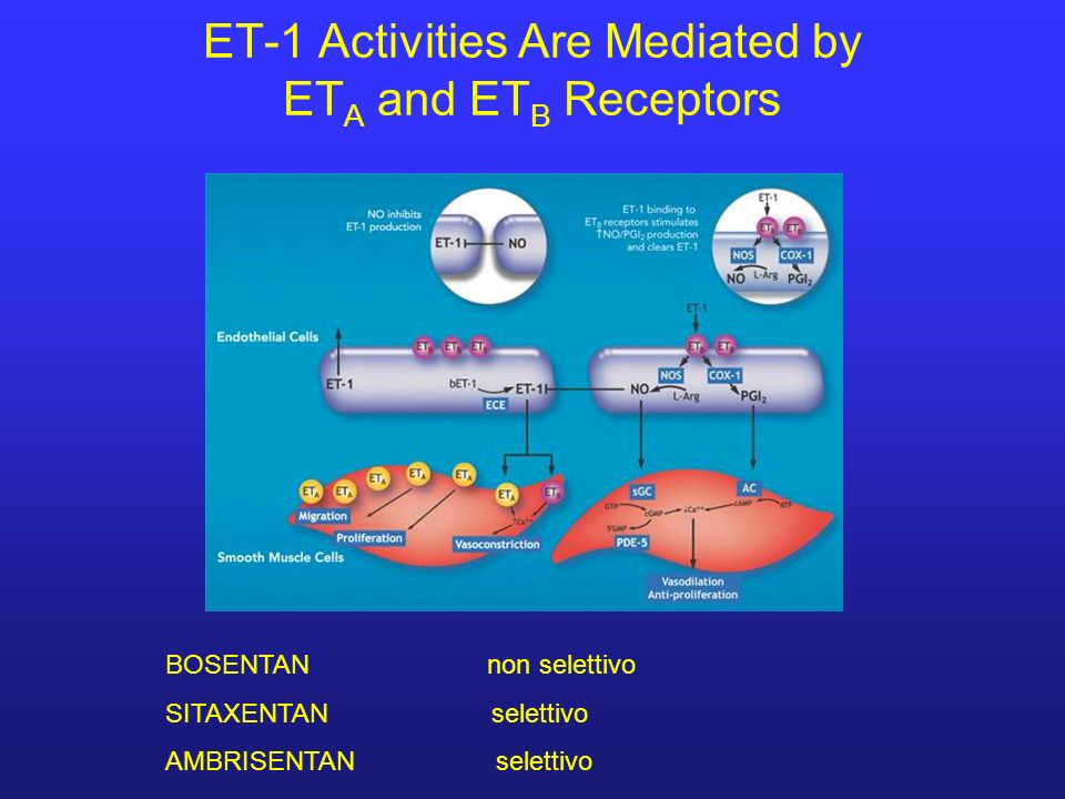 ET-1 Activities Are Mediated by ET A and ET B Receptors BOSENTAN non selettivo SITAXENTAN selettivo AMBRISENTAN selettivo