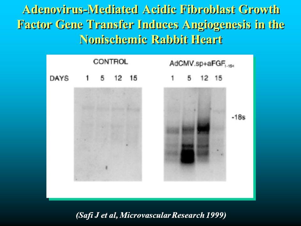 Adenovirus-Mediated Acidic Fibroblast Growth Factor Gene Transfer Induces Angiogenesis in the Nonischemic Rabbit Heart (Safi J et al, Microvascular Re