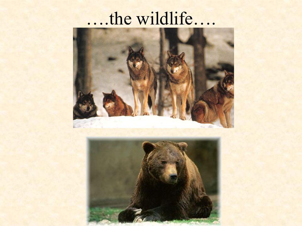 ….the wildlife….