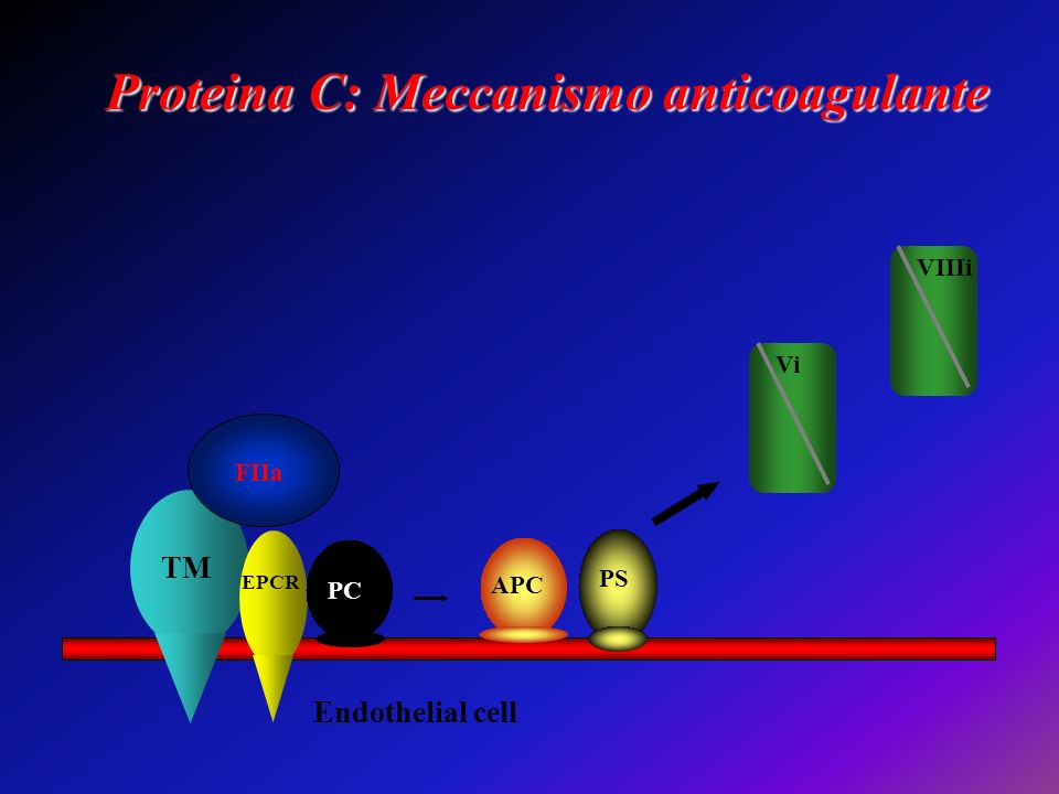 Proteina C: Meccanismo anticoagulante TM EPCR Endothelial cell FIIa Vi VIIIi PC APC PS