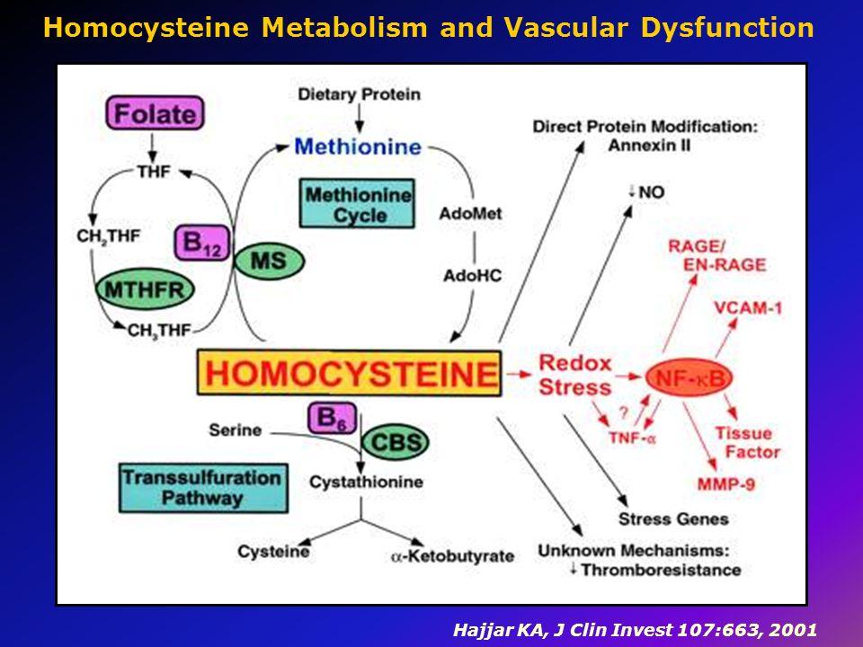 Hajjar KA, J Clin Invest 107:663, 2001 Homocysteine Metabolism and Vascular Dysfunction