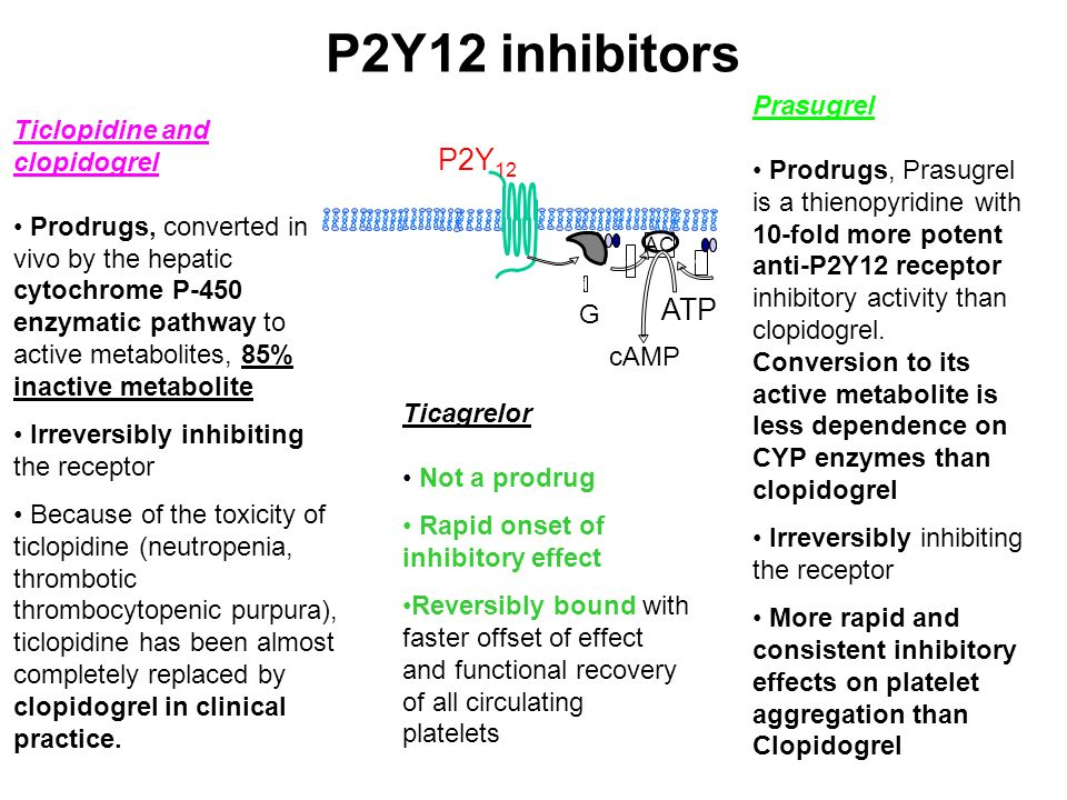 P2Y12 inhibitors AC + G i - ATP cAMP P2Y 12 Ticlopidine and clopidogrel Prodrugs, converted in vivo by the hepatic cytochrome P-450 enzymatic pathway