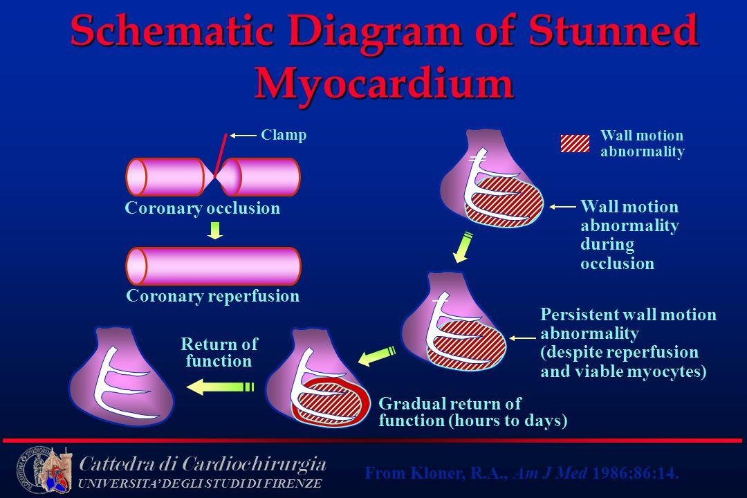 Cattedra di Cardiochirurgia UNIVERSITA DEGLI STUDI DI FIRENZE Schematic Diagram of Stunned Myocardium Wall motion abnormality during occlusion Wall mo