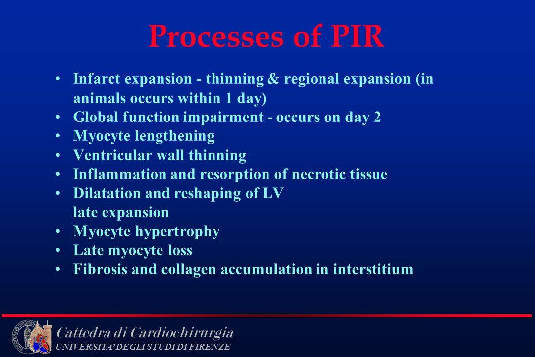 Cattedra di Cardiochirurgia UNIVERSITA DEGLI STUDI DI FIRENZE Processes of PIR Infarct expansion - thinning & regional expansion (in animals occurs wi