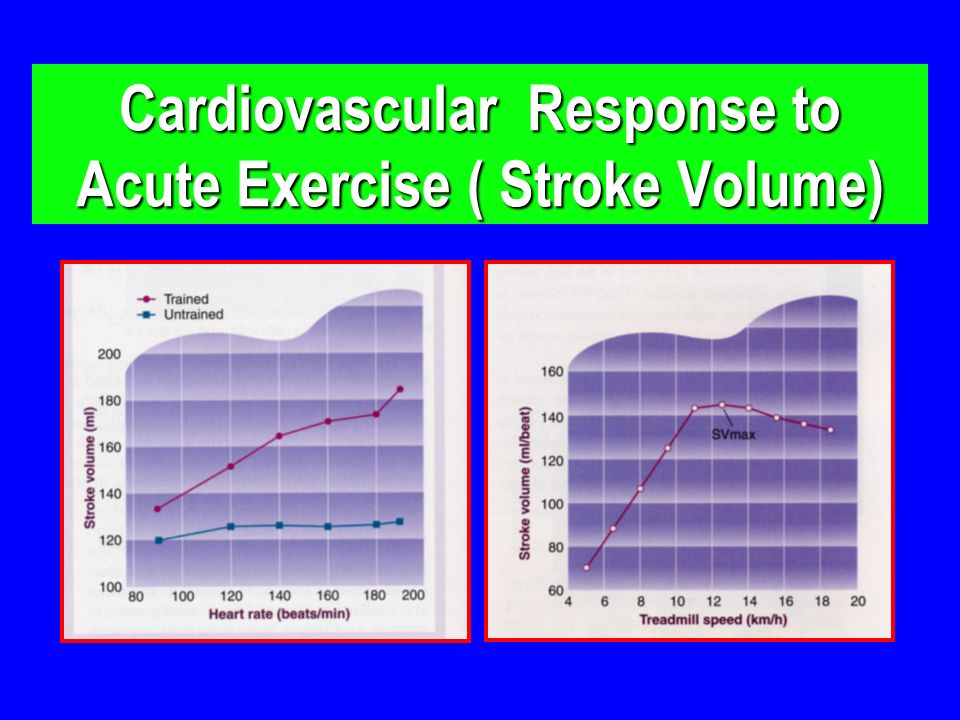 Cardiovascular Response to Acute Exercise ( Stroke Volume)