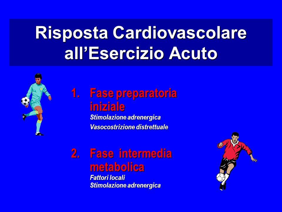 1.Fase preparatoria iniziale Stimolazione adrenergica Vasocostrizione distrettuale 2.Fase intermedia metabolica Fattori locali Stimolazione adrenergica Risposta Cardiovascolare allEsercizio Acuto