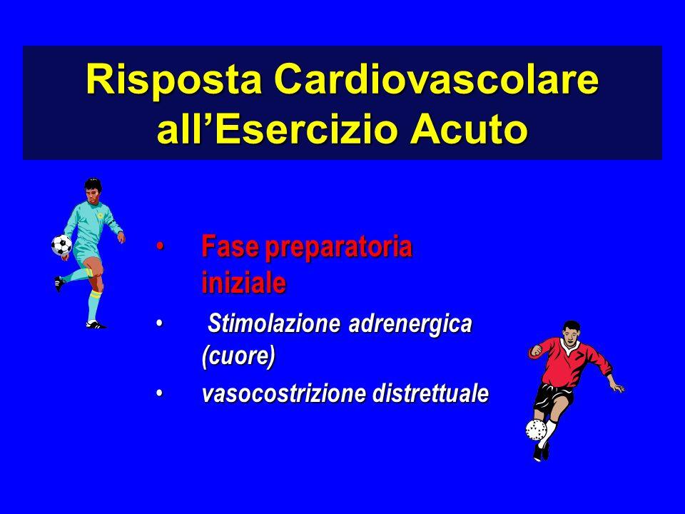 Fase preparatoria iniziale Fase preparatoria iniziale Stimolazione adrenergica (cuore) Stimolazione adrenergica (cuore) vasocostrizione distrettuale vasocostrizione distrettuale Risposta Cardiovascolare allEsercizio Acuto