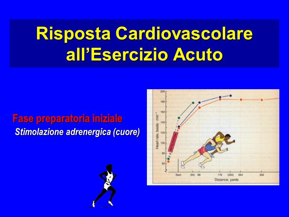 Fase preparatoria iniziale Stimolazione adrenergica (cuore) Stimolazione adrenergica (cuore) Risposta Cardiovascolare allEsercizio Acuto