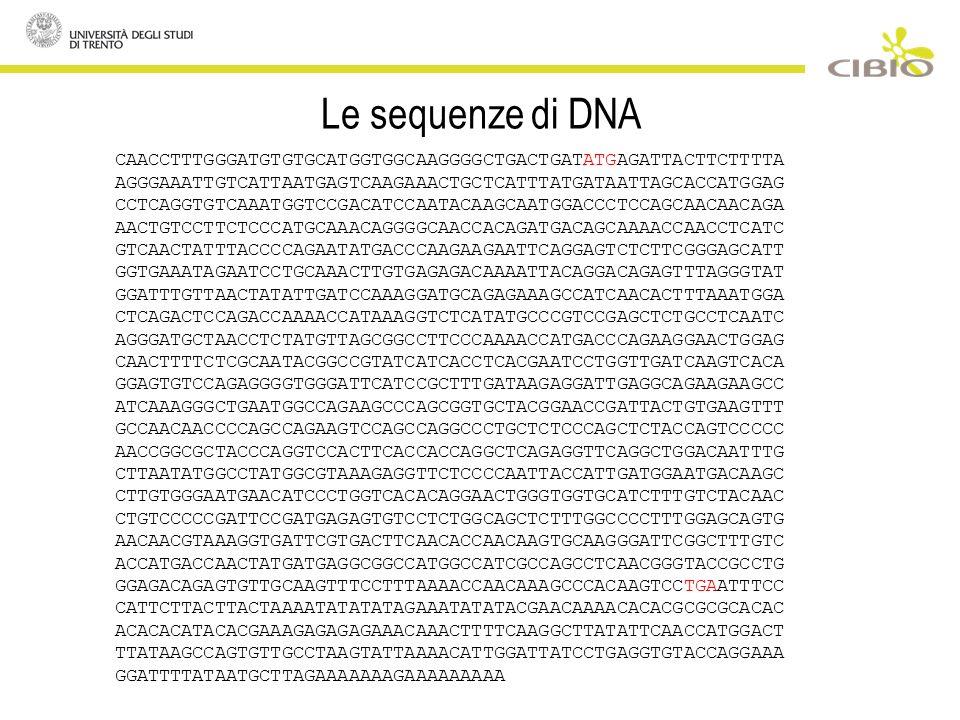 Le sequenze di DNA CAACCTTTGGGATGTGTGCATGGTGGCAAGGGGCTGACTGATATGAGATTACTTCTTTTA AGGGAAATTGTCATTAATGAGTCAAGAAACTGCTCATTTATGATAATTAGCACCATGGAG CCTCAGGTGTCAAATGGTCCGACATCCAATACAAGCAATGGACCCTCCAGCAACAACAGA AACTGTCCTTCTCCCATGCAAACAGGGGCAACCACAGATGACAGCAAAACCAACCTCATC GTCAACTATTTACCCCAGAATATGACCCAAGAAGAATTCAGGAGTCTCTTCGGGAGCATT GGTGAAATAGAATCCTGCAAACTTGTGAGAGACAAAATTACAGGACAGAGTTTAGGGTAT GGATTTGTTAACTATATTGATCCAAAGGATGCAGAGAAAGCCATCAACACTTTAAATGGA CTCAGACTCCAGACCAAAACCATAAAGGTCTCATATGCCCGTCCGAGCTCTGCCTCAATC AGGGATGCTAACCTCTATGTTAGCGGCCTTCCCAAAACCATGACCCAGAAGGAACTGGAG CAACTTTTCTCGCAATACGGCCGTATCATCACCTCACGAATCCTGGTTGATCAAGTCACA GGAGTGTCCAGAGGGGTGGGATTCATCCGCTTTGATAAGAGGATTGAGGCAGAAGAAGCC ATCAAAGGGCTGAATGGCCAGAAGCCCAGCGGTGCTACGGAACCGATTACTGTGAAGTTT GCCAACAACCCCAGCCAGAAGTCCAGCCAGGCCCTGCTCTCCCAGCTCTACCAGTCCCCC AACCGGCGCTACCCAGGTCCACTTCACCACCAGGCTCAGAGGTTCAGGCTGGACAATTTG CTTAATATGGCCTATGGCGTAAAGAGGTTCTCCCCAATTACCATTGATGGAATGACAAGC CTTGTGGGAATGAACATCCCTGGTCACACAGGAACTGGGTGGTGCATCTTTGTCTACAAC CTGTCCCCCGATTCCGATGAGAGTGTCCTCTGGCAGCTCTTTGGCCCCTTTGGAGCAGTG AACAACGTAAAGGTGATTCGTGACTTCAACACCAACAAGTGCAAGGGATTCGGCTTTGTC ACCATGACCAACTATGATGAGGCGGCCATGGCCATCGCCAGCCTCAACGGGTACCGCCTG GGAGACAGAGTGTTGCAAGTTTCCTTTAAAACCAACAAAGCCCACAAGTCCTGAATTTCC CATTCTTACTTACTAAAATATATATAGAAATATATACGAACAAAACACACGCGCGCACAC ACACACATACACGAAAGAGAGAGAAACAAACTTTTCAAGGCTTATATTCAACCATGGACT TTATAAGCCAGTGTTGCCTAAGTATTAAAACATTGGATTATCCTGAGGTGTACCAGGAAA GGATTTTATAATGCTTAGAAAAAAAGAAAAAAAAA