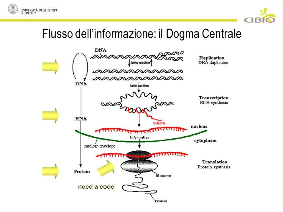 Flusso dellinformazione: il Dogma Centrale need a code