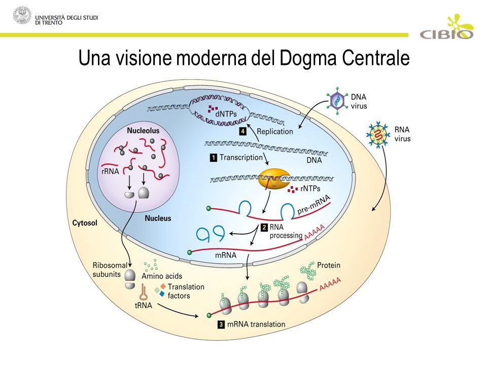 Una visione moderna del Dogma Centrale