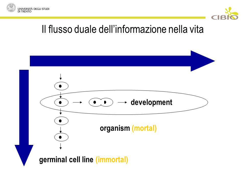 Il flusso duale dellinformazione nella vita development organism (mortal) germinal cell line (immortal)