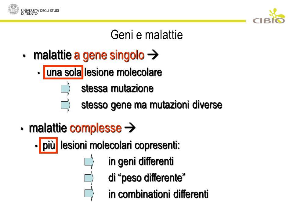 Geni e malattie malattie a gene singolo malattie a gene singolo una sola lesione molecolare una sola lesione molecolare stessa mutazione stesso gene ma mutazioni diverse malattie complesse malattie complesse più lesioni molecolari copresenti: più lesioni molecolari copresenti: in geni differenti di peso differente in combinationi differenti