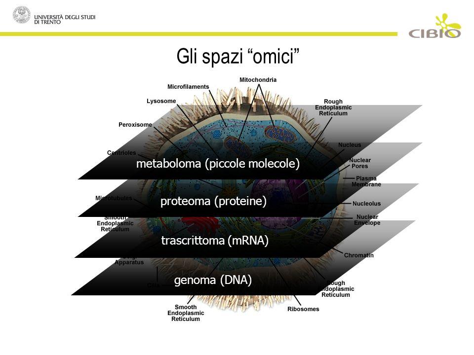 Gli spazi omici genoma (DNA) trascrittoma (mRNA) proteoma (proteine) metaboloma (piccole molecole)