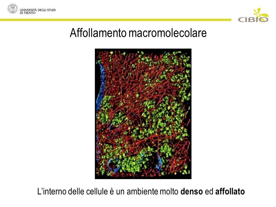 Affollamento macromolecolare Linterno delle cellule è un ambiente molto denso ed affollato