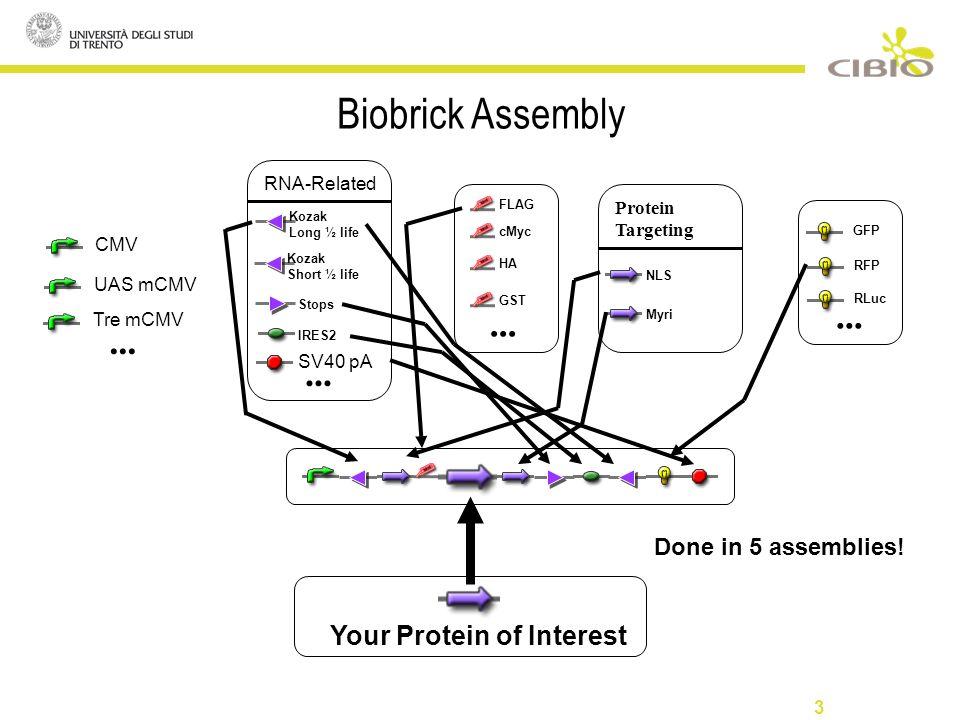 3 Biobrick Assembly Tre mCMV UAS mCMV CMV... FLAG cMyc HA GST...