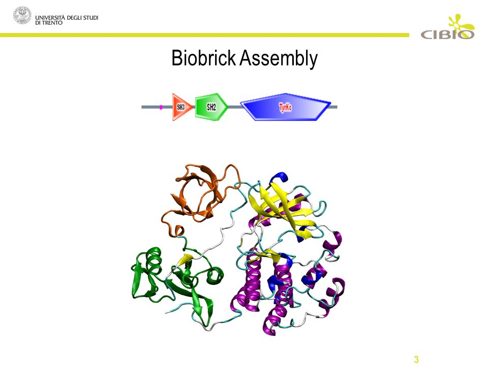 3 Biobrick Assembly