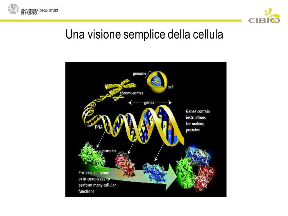 Una visione semplice della cellula