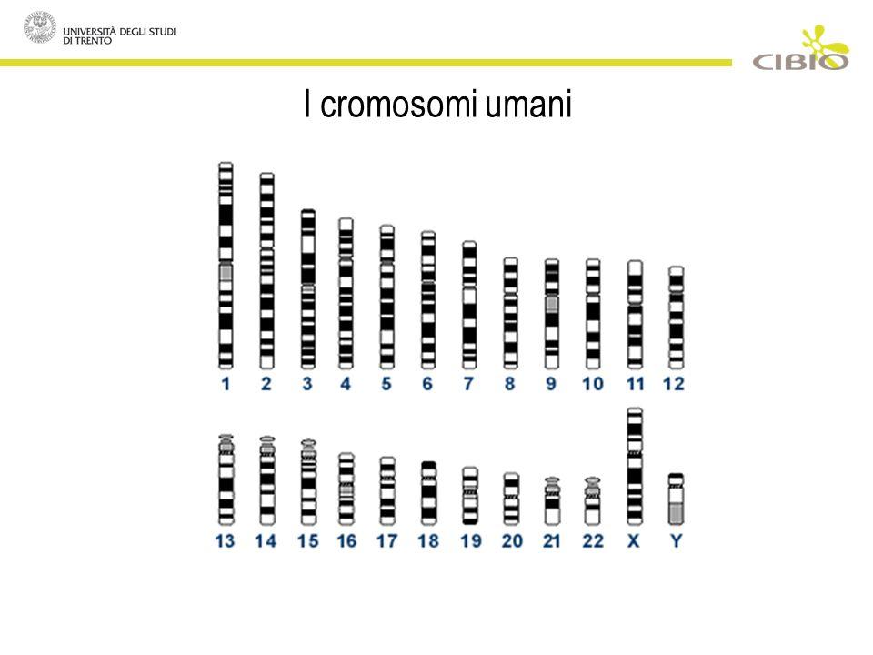 I cromosomi umani