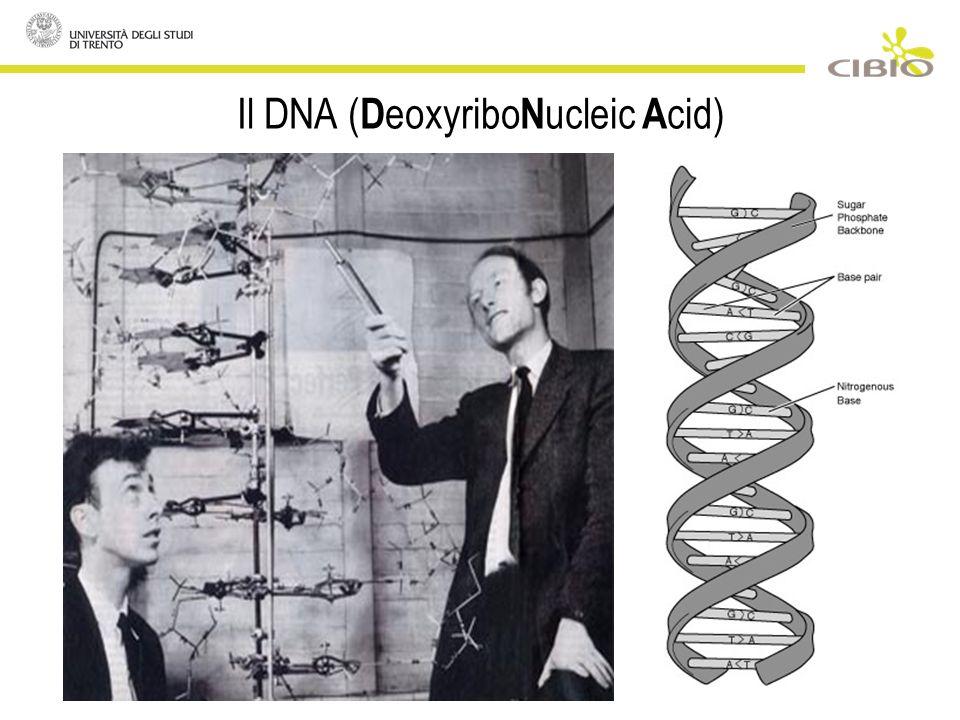Una curiosa conseguenza: il clonaggio di individui