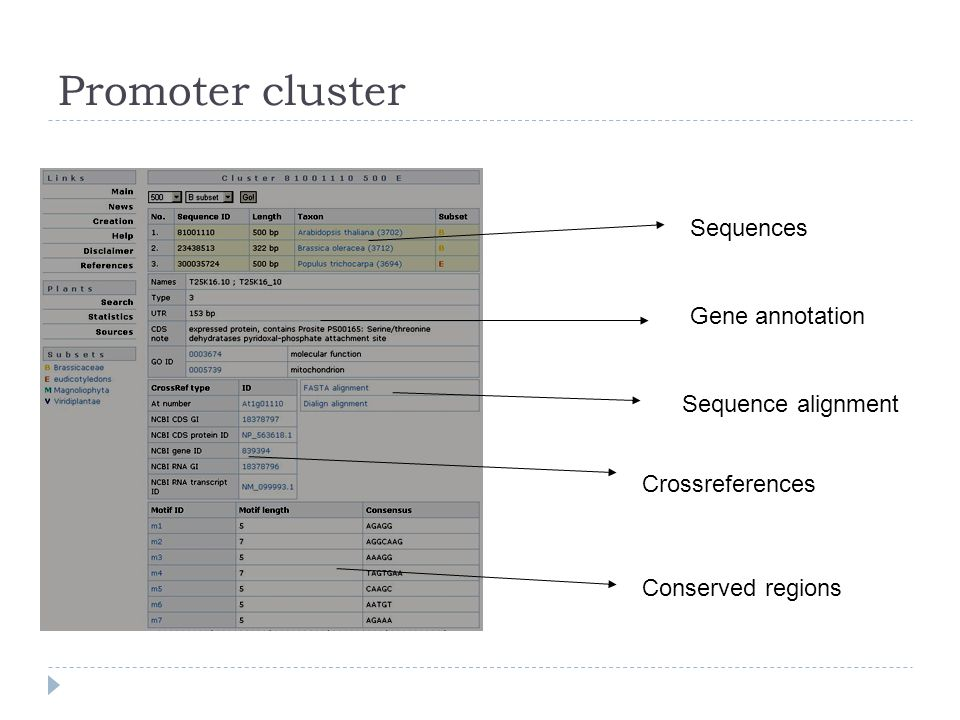Promoter cluster Sequences Gene annotation Sequence alignment Crossreferences Conserved regions