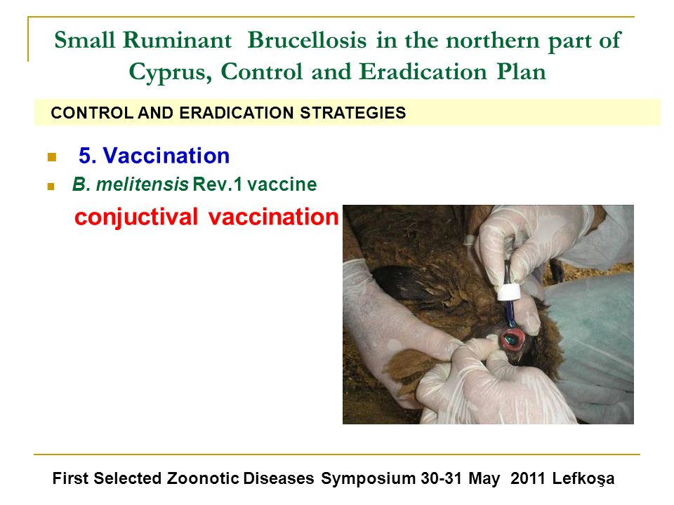 Small Ruminant Brucellosis in the northern part of Cyprus, Control and Eradication Plan 5. Vaccination B. melitensis Rev.1 vaccine conjuctival vaccina