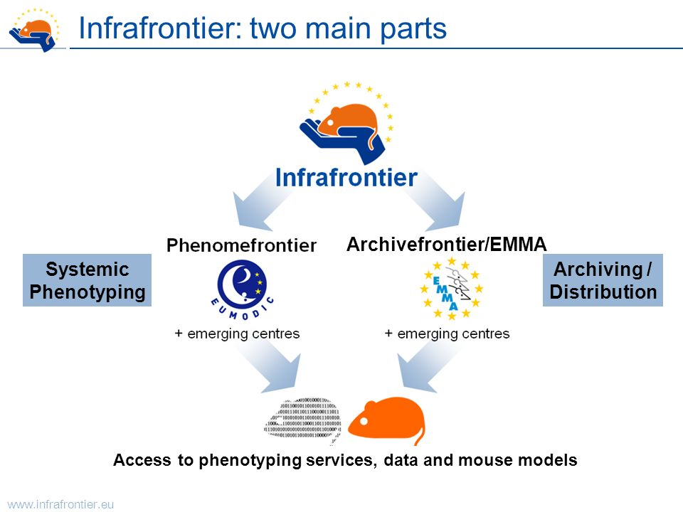 www.infrafrontier.eu Access to phenotyping data and mouse models Infrafrontier Phenomefrontier Archivefrontier + emerging centres Infrafrontier: two m