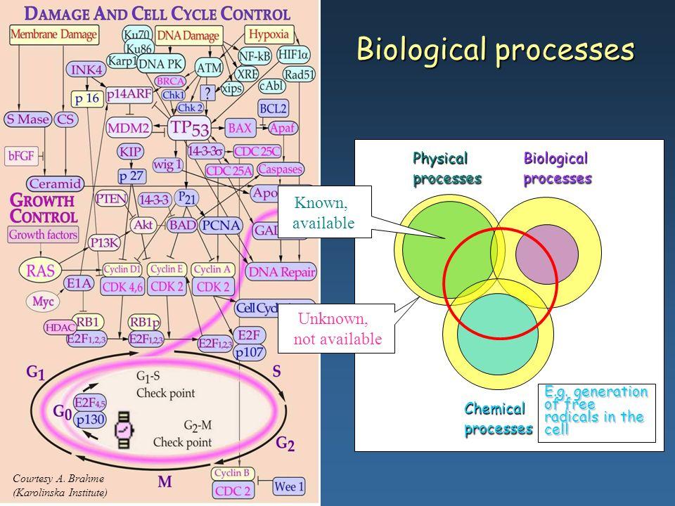 Courtesy A. Brahme (KI) Courtesy A. Brahme (Karolinska Institute) Biological processes Physical processes Biological processes Chemical processes Know