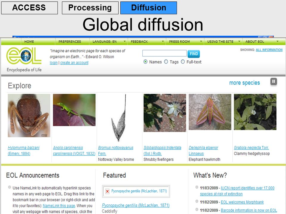 30 Global diffusion ACCESSProcessingDiffusion